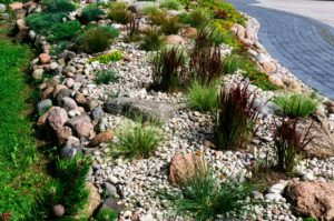 Colorado Xeriscape