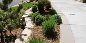 Landscape Design in Littleton, Colorado